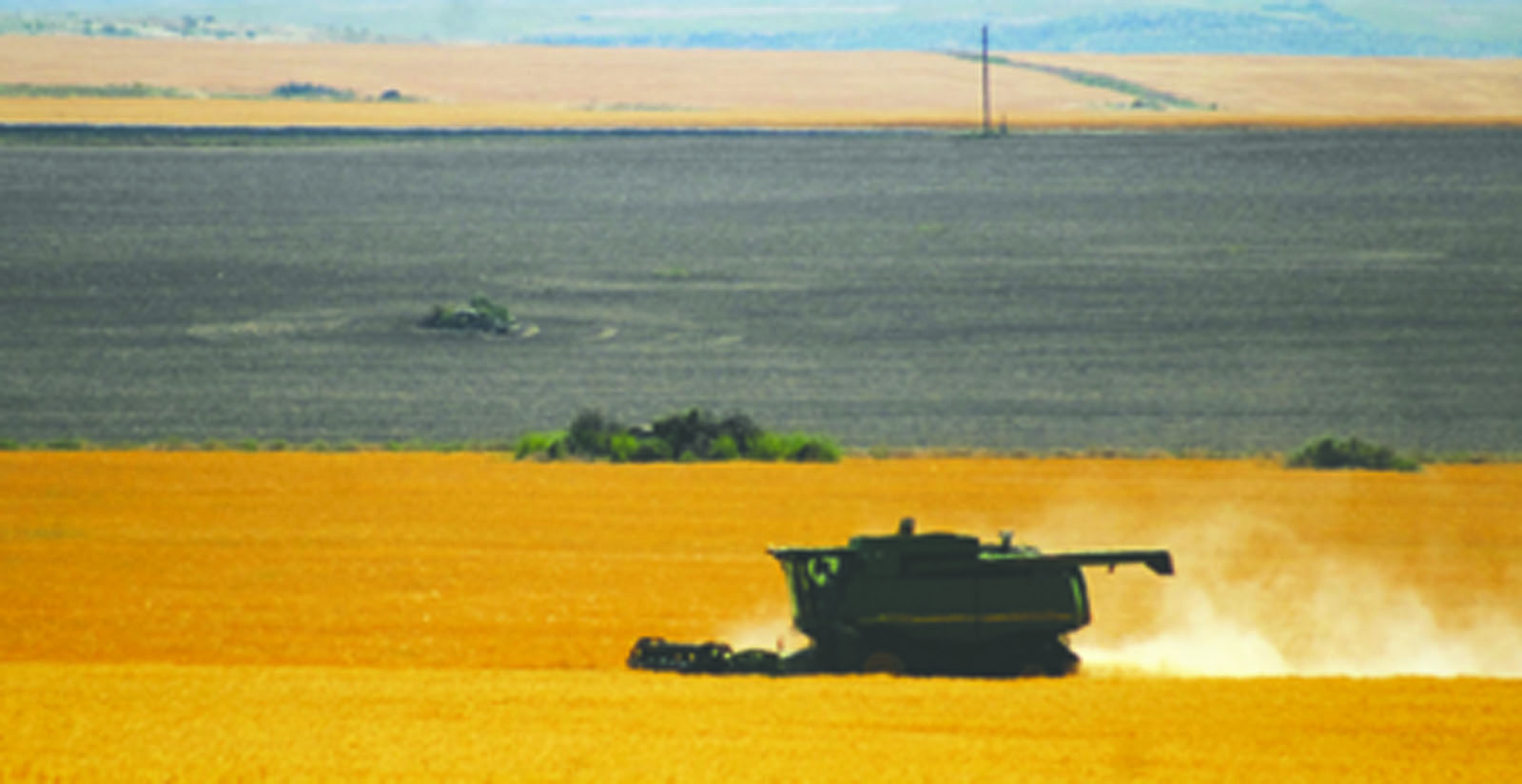 A combine works its way through a field of wheat on the Waterville plateau at Mansfield last Thursday, July 27. The Central Washington Grain Growers at Mansfield recorded the first trailer load of canola at the elevator on July 17, and the first trailer load of wheat on July 26.